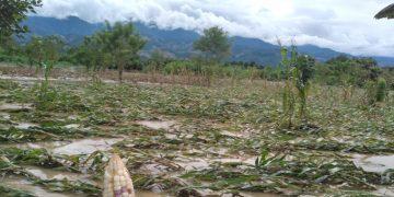 danos-cultivos-tormenta