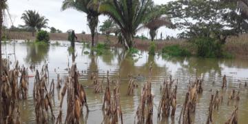 MAGA da medidas preventivas para proteger cultivos ante llvuias