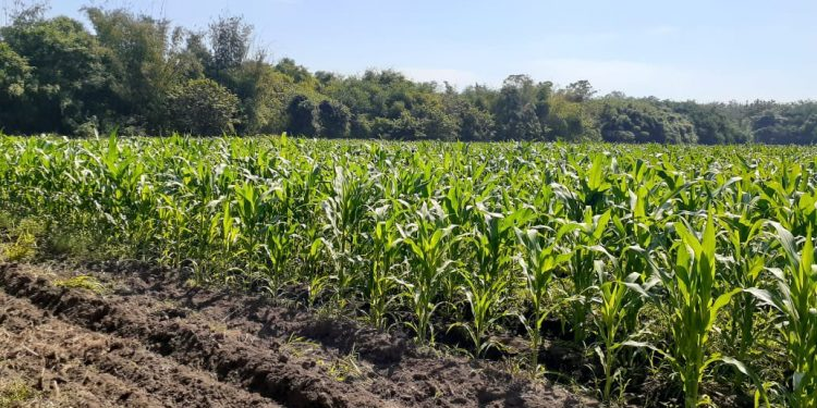 Cuidado de cultivos ante lluvias