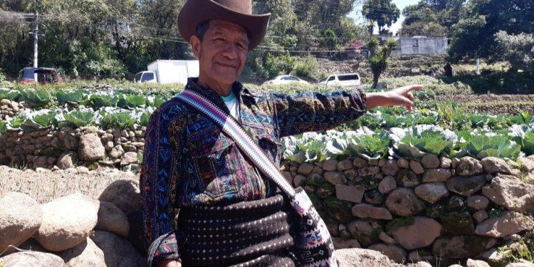 La agricultura es importante para el desarrollo económico./Foto: Julio Morales.
