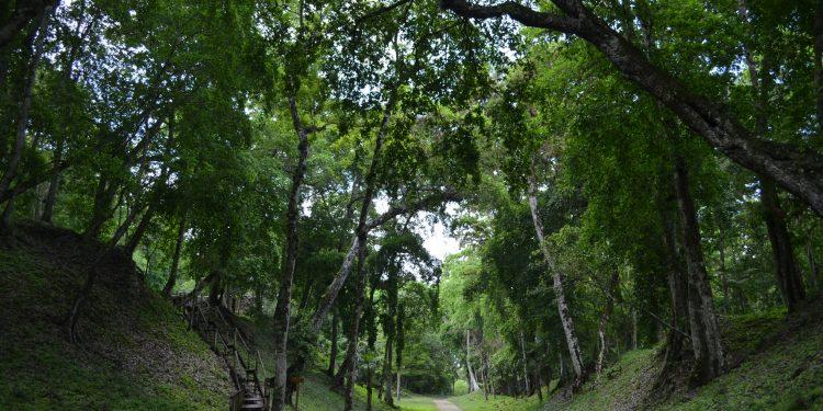Establecen acciones para la protección de la biodiversidad en Petén