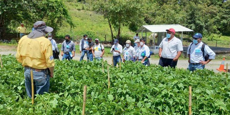 Extensionistas de Huehuetenango refuerzan capacidades