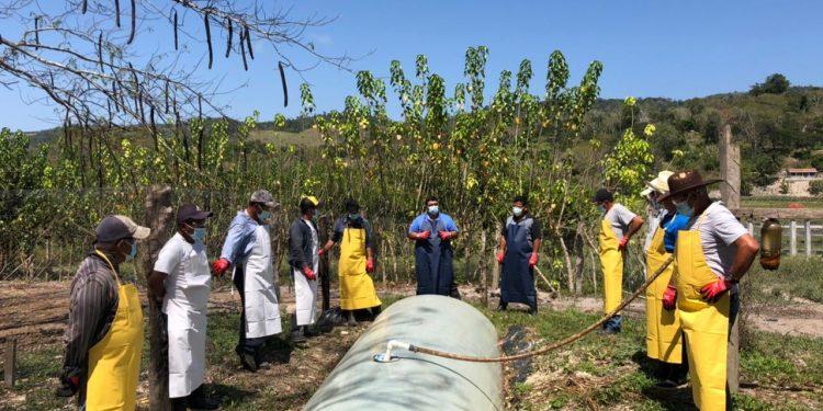 Al menos 35 mil familias de la cuenca del lago Petén, Itzá, fueron beneficiadas con el programa de manejo forestal