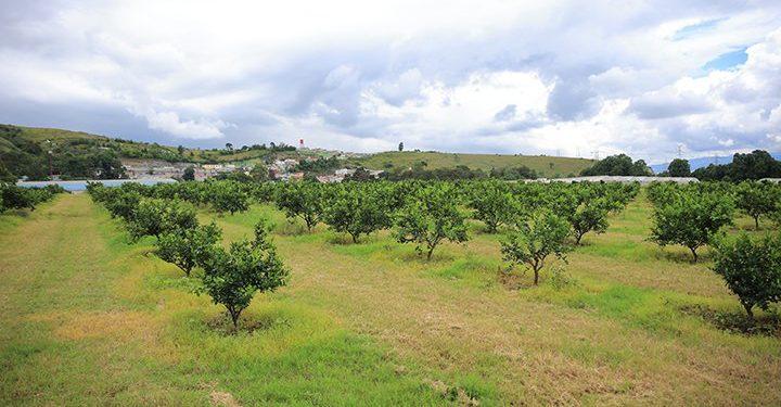 Guatemala e Israel impulsan la innovación agropecuaria