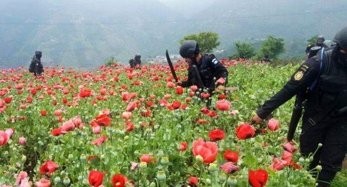 Fuerzas de seguridad confiscan 2.8 millardos de quetzales al narcotráfico