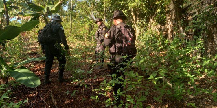 Suman 417 mil 684 matas de coca erradicadas en Petén